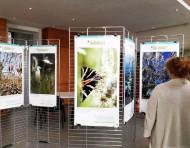 Exposition biodiversité