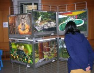 La préservation des forêts