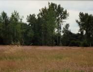 Mortagne-du-Nord, pelouse métallicole
