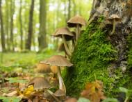 A la découverte des champignons