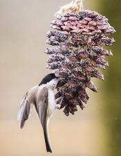 [PNR] NOV Les oiseaux en hiver.jpg