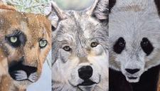 Expo Le monde merveilleux des animaux