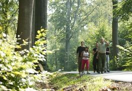 Forêt domaniale de Raismes-Saint-Amand-Wallers - Saint-Amand-les-Eaux